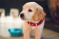 vitamina c nel cane