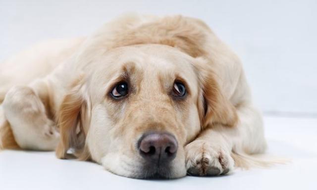 Foto Paure e ansie nel cane: cause e trattamento