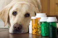 Foto Farmaci per il dolore nel Cane