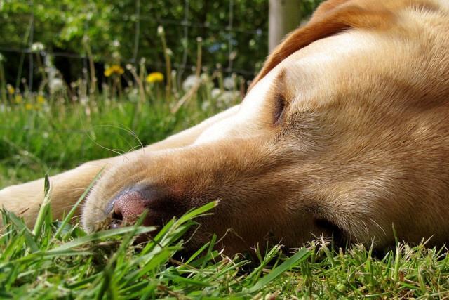 Foto Cancro nel cane:  alcuni consigli