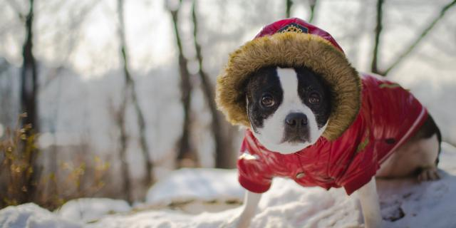 Foto Segni per capire se il cane ha freddo