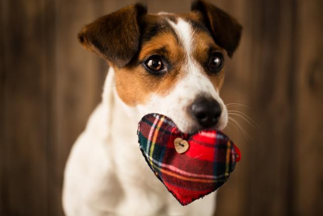 Foto Arresto cardiaco nel cane: sintomi e cure