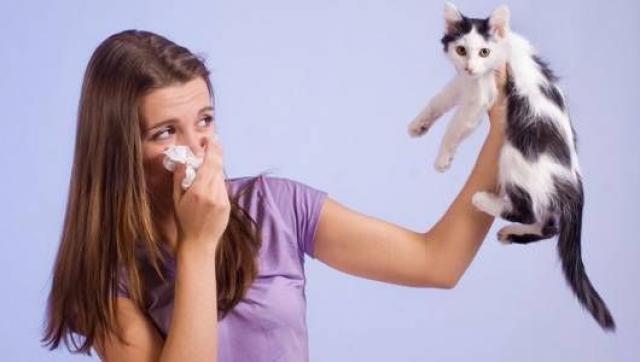 Foto Sei allergico al gatto? Ecco alcuni consigli