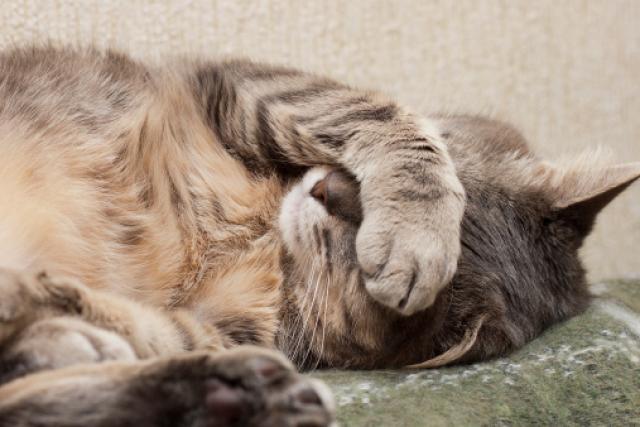 Foto Stitichezza del gatto: cause e cure