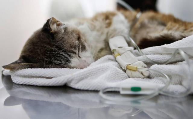 problemi renali gatto