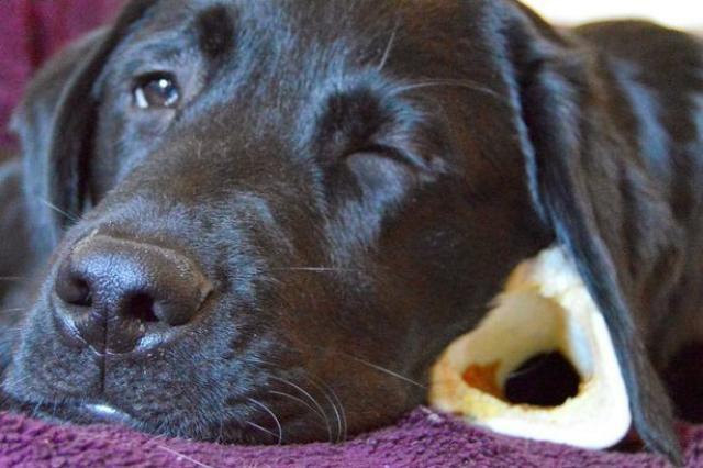 Foto Ustioni e scottature nei cani: cosa fare
