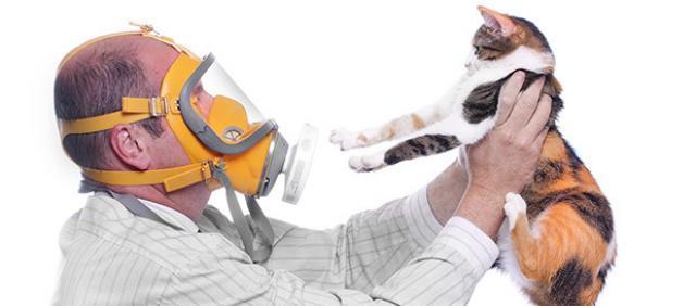 Foto Alcune razze di gatti ipoallergenici
