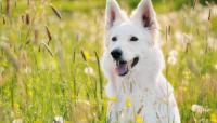 Foto 5 consigli per ridurre le allergie primaverili nel Cane