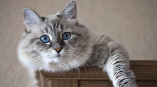 Foto Rabbia del Gatto e come curarla