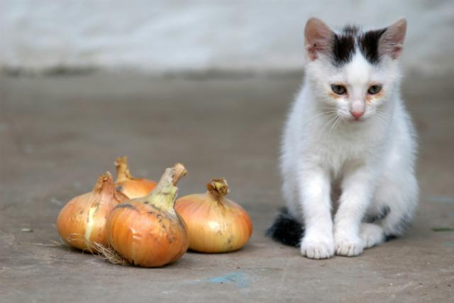 Foto 3 Alimenti comuni tossici per il Gatto