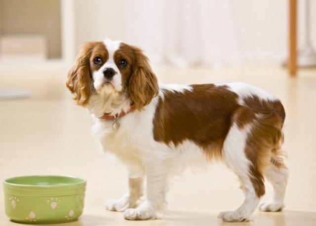 Foto Trattamento naturale nel Cane con malattia renale