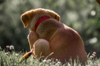 Foto Nuovo trattamento per le allergie nel Cane