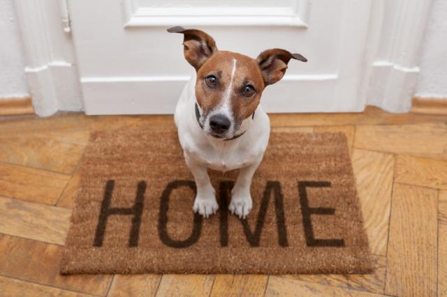 Foto Segni che il vostro Cane soffre di Ansia da Separazione