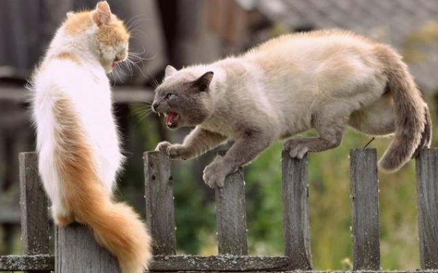 Il Gatto è Aggressivo Cause E Rimedi Mondopetsit
