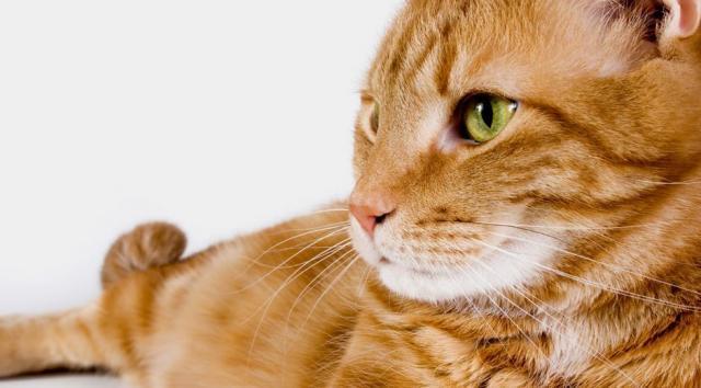 Foto Prendersi cura di un Gatto anziano