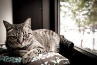 Foto Malattie del Gatto trasmissibili all'uomo