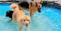 Foto Prevenire il colpo di calore nel Cane