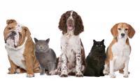Foto Allergie nel Cane e Gatto