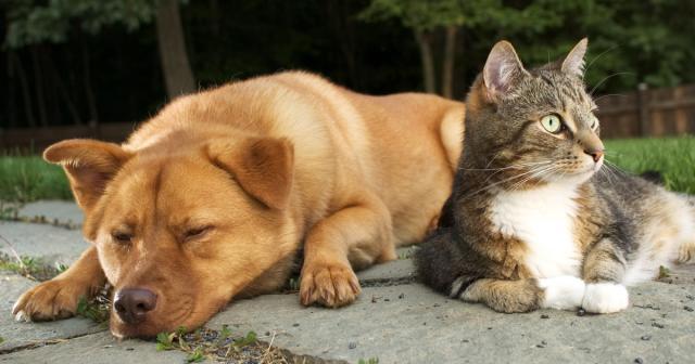 Foto Artrite nel Cane e nel Gatto