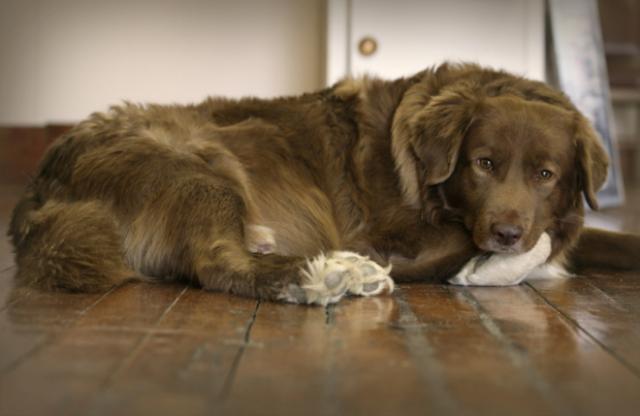 Foto Cure per l'artrite nel Cane e nel Gatto