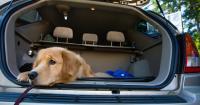 Foto Cosa fare se un Cane soffre il mal d'auto