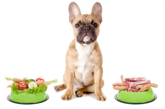 Foto Dieta vegetariana per Cani: pro e contro