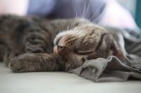 Foto Perchè i gatti fanno le fusa?