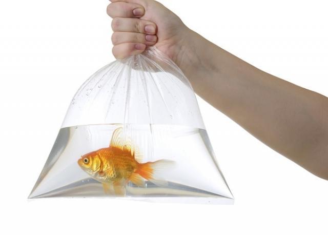 Foto Trasportare un Pesce in sicurezza