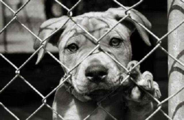 Foto Cosa fare se si è testimoni di un maltrattamento a un animale? Le Linee guida.
