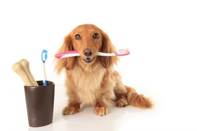 Foto Il Cane ha l'alito cattivo? Cause e cure