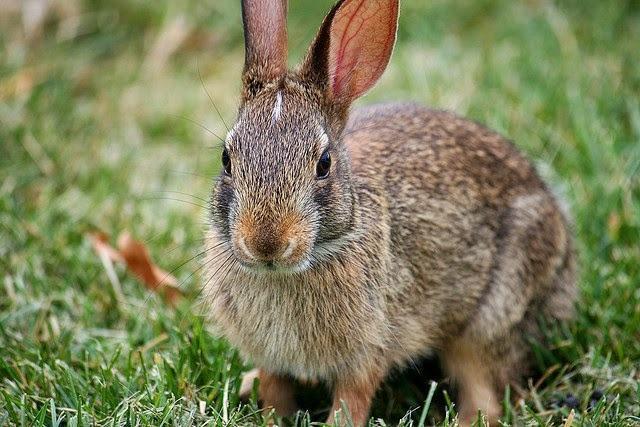 Foto Il coniglio ha la diarrea? Cause e cure