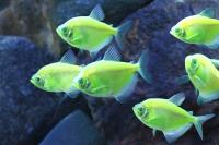 Foto Quanto vive un pesce nell'acquario?