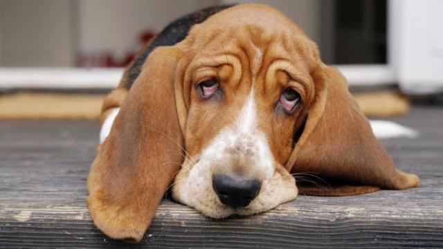 Foto Cosa fare se il Cane vomita e ha diarrea