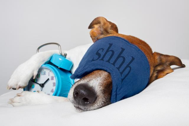 Foto Melatonina - Farmaci per cani e gatti