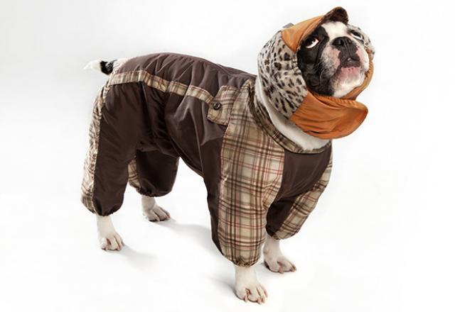 Foto Polmonite da aspirazione nel Cane