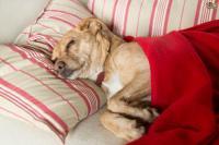 Foto Il cane non fa pipì: cause e cure