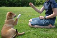 Foto 11 Regole per addestrare il Cane