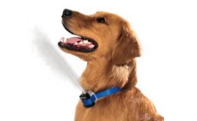 Foto Avete mai usato un Collare alla Citronella per il vostro cane?