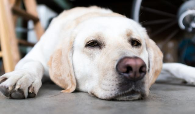 Foto Esofagite nel Cane: sintomi e cure