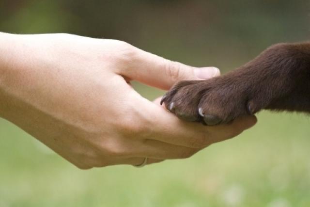 Foto Linfosarcoma nel Cane: sintomi e cura