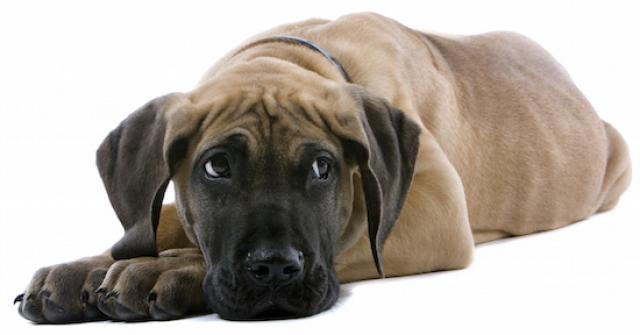 Foto Tumore alle ovaie nel cane