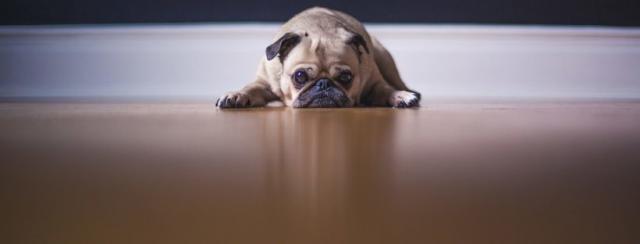 cane vomita mattino