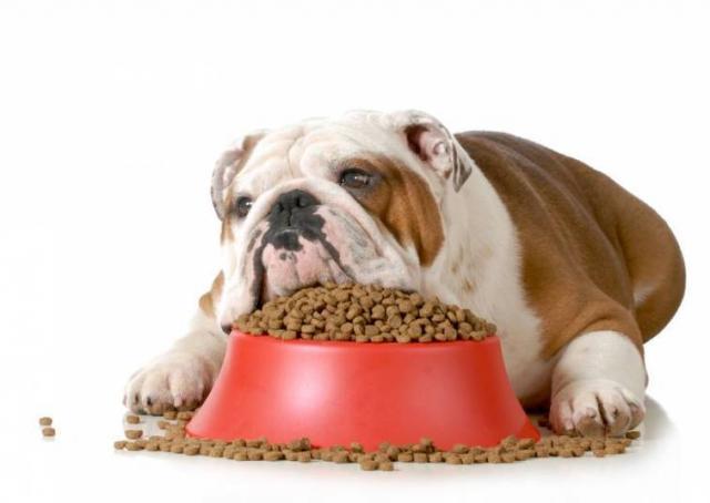 Foto Il Cane obeso: cause e pericoli