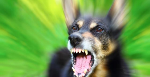 Foto Cane aggressivo: cosa fare?