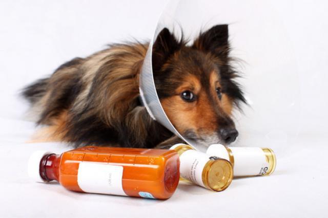 Foto Pancreatite nel cane: cos'è e come curarla