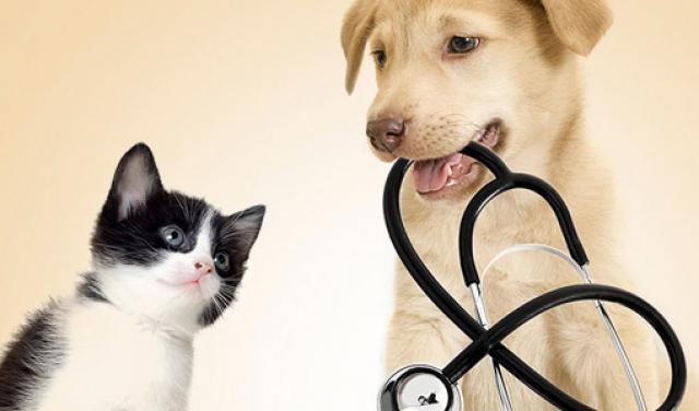 Foto Ipocalcemia nel Cane e nel Gatto. Cause, sintomi e cure.