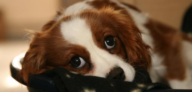 Foto Aiutare un cane timido e pauroso