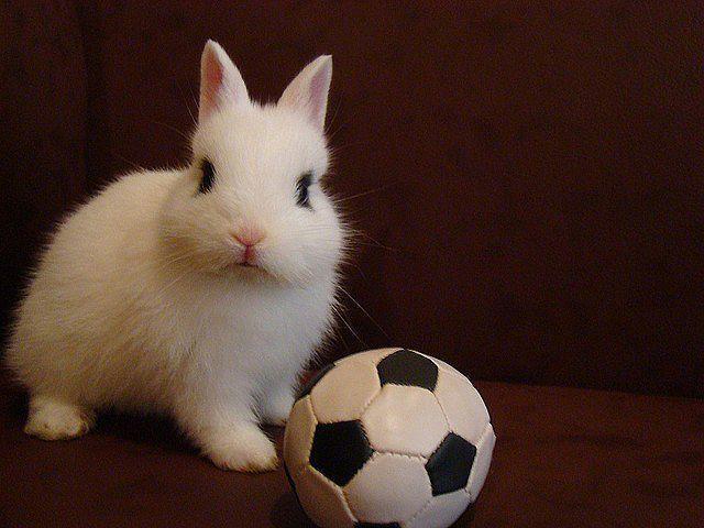 Foto Si può fare il bagno al Coniglio?