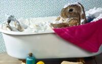 fare bagno al coniglio