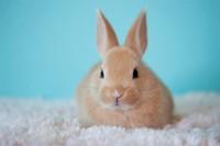 toelettatura coniglio